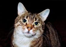 Cat. Smart cat Stock Photo