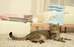 Free Cat Royalty Free Stock Photos - 3591288