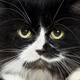 Cat. Close up on a cat face Royalty Free Stock Images