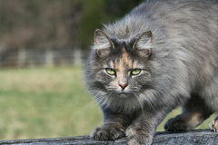 Cat. Farm cat keeping an eye out Stock Images