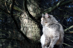 Cat. Farm cat keeping an eye out royalty free stock photo