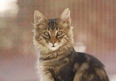 Cat. In Sardinia, Italy Stock Photography