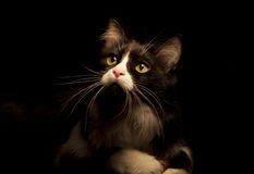Cat. Low key black and white cat Royalty Free Stock Image
