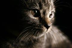 Cat1 图库摄影