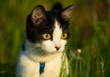 CAT 图库摄影
