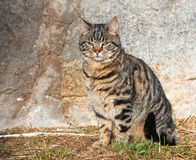 CAT Стоковые Изображения RF