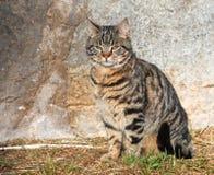 CAT 免版税库存图片
