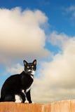 Cat #4 Royalty Free Stock Photos