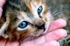 Cat. Sweet cat in my hand Royalty Free Stock Photography