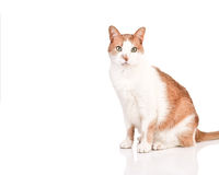 Free Cat Royalty Free Stock Photography - 4021557