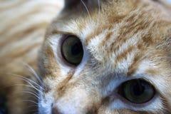 Cat. A cute cat Stock Photo