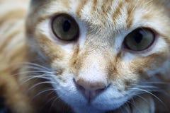 Cat. A cute cat Stock Photos