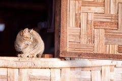 CAT_0001 免版税库存照片