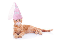 Cat公主 库存照片