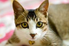 cat Στοκ φωτογραφία με δικαίωμα ελεύθερης χρήσης