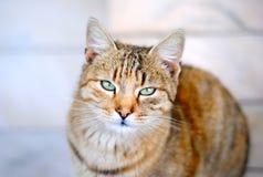 Free Cat Royalty Free Stock Photos - 43775138