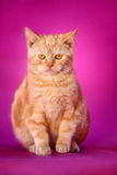 Cat. A young cat on pink background royalty free stock photo
