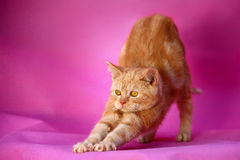 Cat. A cat on pink background stock photo