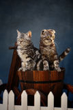 Cat. Two young cat have diffrent expressions stock image