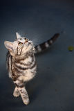 Cat. A cat focus at something royalty free stock photography