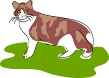 Cat. Stray cat illustration in loose drawing style Stock Photography