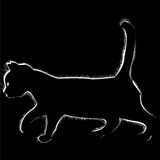 Cat_02 免版税图库摄影