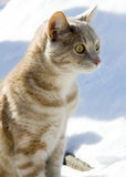 Cat. A cat sitting outdoor in the snow stock photography