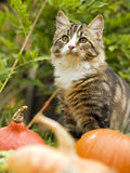 Cat. With pumpkin outside close up shoot stock image