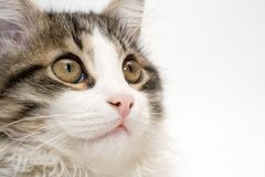 Cat. On white background Stock Photos