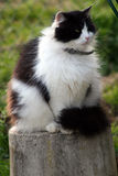 Cat. Black and white cat on the stock Stock Image