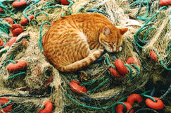 Cat. A cat sleeping on a fisher's net royalty free stock photo