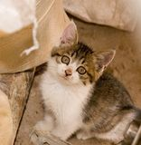 Cat. Cute cat in a farm of beijing Royalty Free Stock Photography