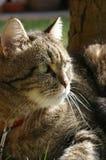 Cat. Looking faraway toward future Stock Images