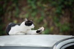 Free Cat Stock Photos - 66291033