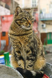 Cat. A cat in the harbour of a Sicilian village Stock Image