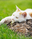 Cat. The cat have a rest Royalty Free Stock Image