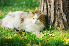 Cat in lawn in sunlight Royalty Free Stock Photo
