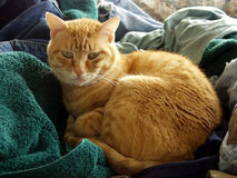 The Cat. Clean laundry always looks like a good place to sleep. Olympus 5. 0 megapixel camera with natural light. Lots of interesting textures created from stock photography