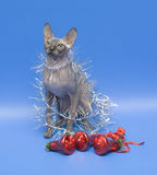 Cat. Sphinx with Christmas ornaments. Dogs and cats in the most different situations and positions Stock Photography