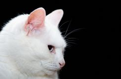 Cat. On a black background Stock Image