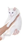 Cat. Perfect kitten on the white background Royalty Free Stock Images