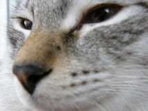 Cat. Young cat is looking far away royalty free stock photography