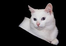 Cat. On a black background Royalty Free Stock Photos