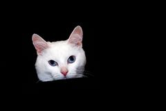 Cat. On a black background Royalty Free Stock Photo