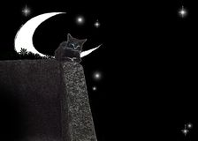 Cat. Black cat is sleeping on the wall Royalty Free Stock Photo
