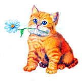 Cat. Cute red kitty with flower, lovely, an fun. Drawing a water colour Stock Image