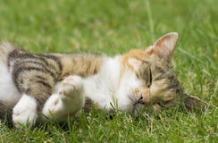 Cat. Sleeping cat on the grass Royalty Free Stock Images
