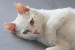 Free Cat Royalty Free Stock Photo - 7774275