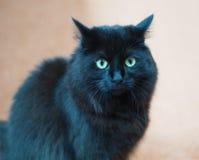 Free Cat Royalty Free Stock Image - 77764056