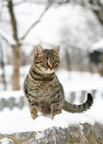Cat. Cat against a winter landscape. A cat on snow Royalty Free Stock Image